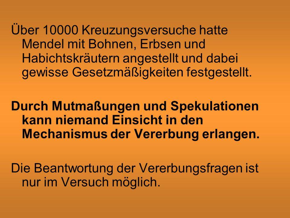 Über 10000 Kreuzungsversuche hatte Mendel mit Bohnen, Erbsen und Habichtskräutern angestellt und dabei gewisse Gesetzmäßigkeiten festgestellt.