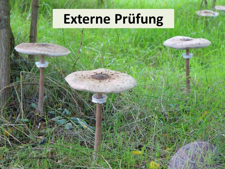 Externe Prüfung © ELKB – Bernd Brinkmann