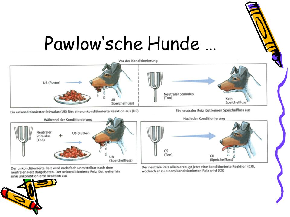 Pawlow'sche Hunde …