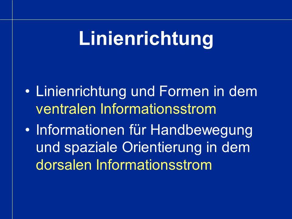 Linienrichtung Linienrichtung und Formen in dem ventralen Informationsstrom.