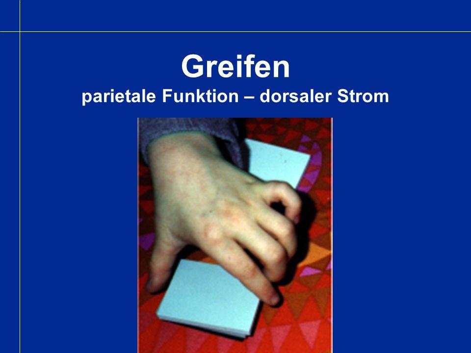 Greifen parietale Funktion – dorsaler Strom