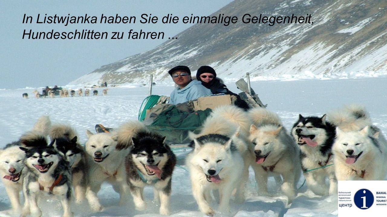 In Listwjanka haben Sie die einmalige Gelegenheit, Hundeschlitten zu fahren ...