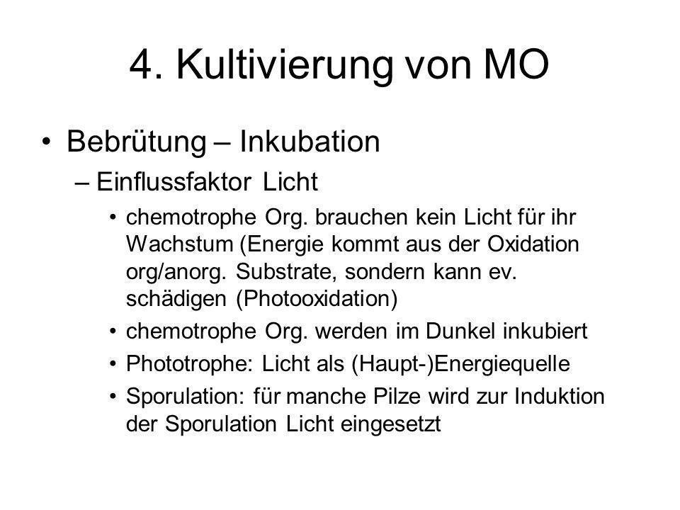 4. Kultivierung von MO Bebrütung – Inkubation Einflussfaktor Licht