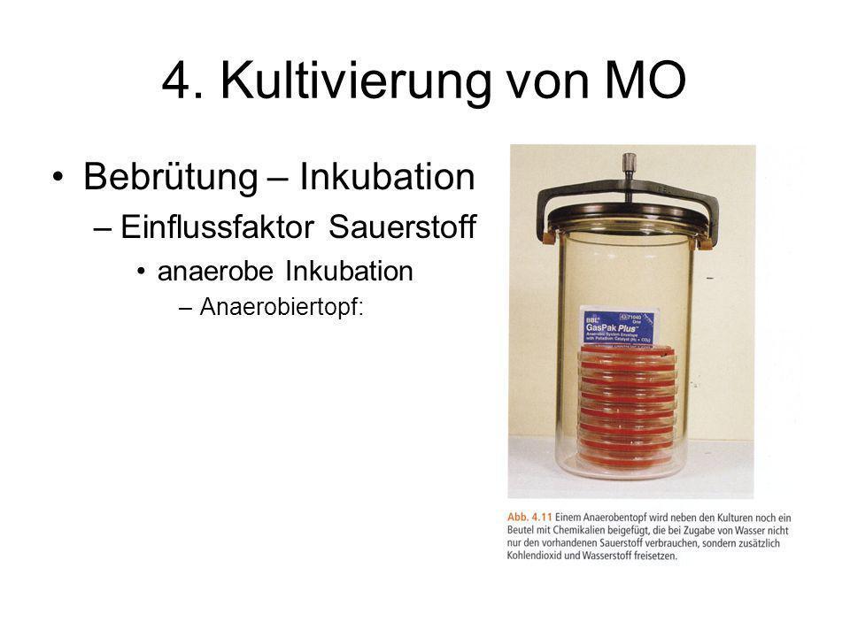 4. Kultivierung von MO Bebrütung – Inkubation