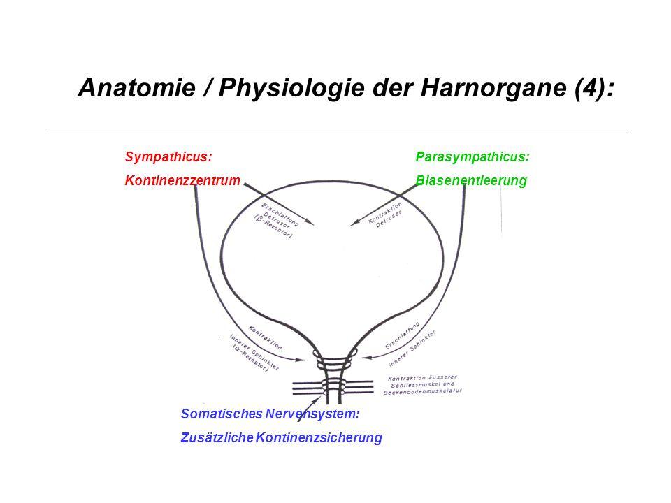 Anatomie / Physiologie der Harnorgane (4):