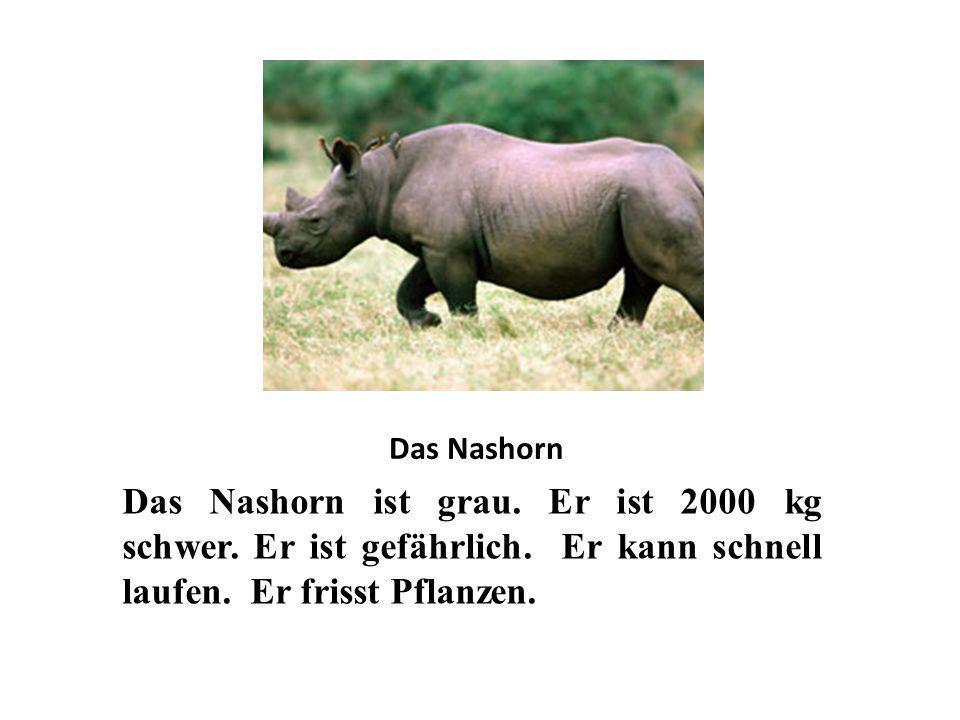 Das Nashorn Das Nashorn ist grau. Er ist 2000 kg schwer.