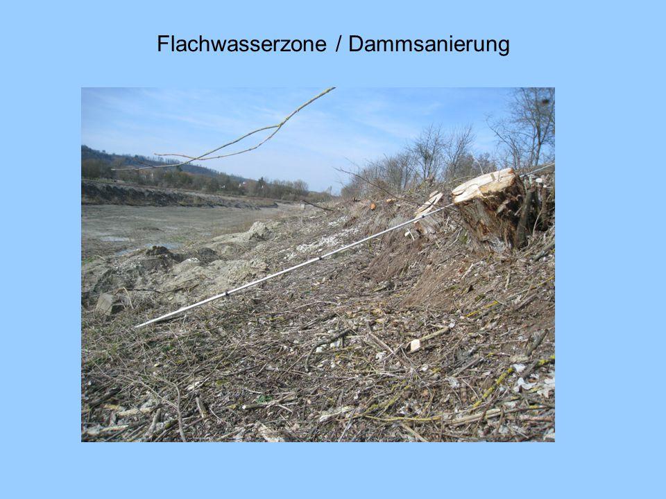 Flachwasserzone / Dammsanierung