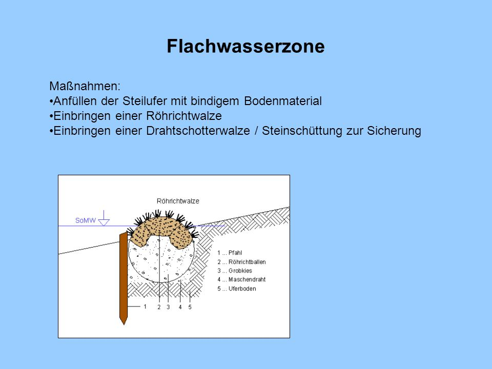 Flachwasserzone Maßnahmen: