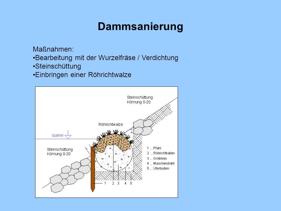 Dammsanierung Maßnahmen: Bearbeitung mit der Wurzelfräse / Verdichtung