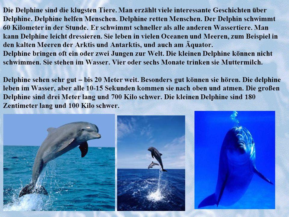 Die Delphine sind die klugsten Tiere