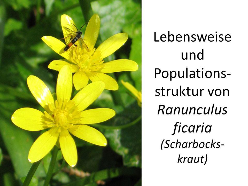 Lebensweiseund Populations-struktur von Ranunculus ficaria (Scharbocks-kraut)