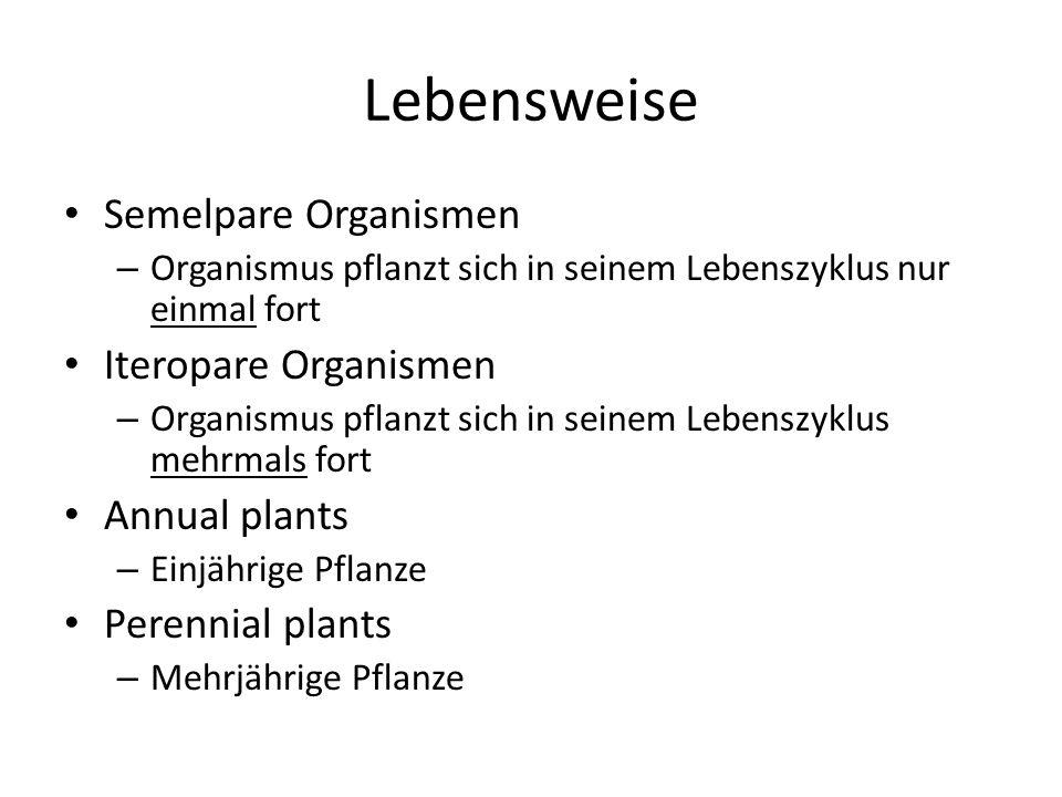 Lebensweise Semelpare Organismen Iteropare Organismen Annual plants