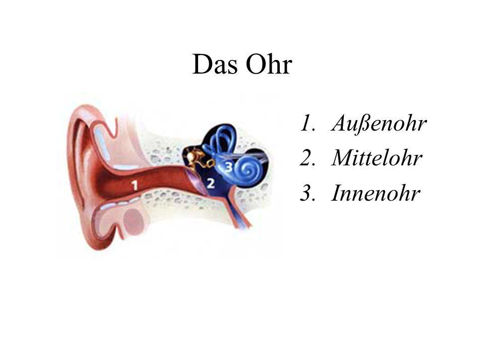 Das Ohr Außenohr Mittelohr Innenohr