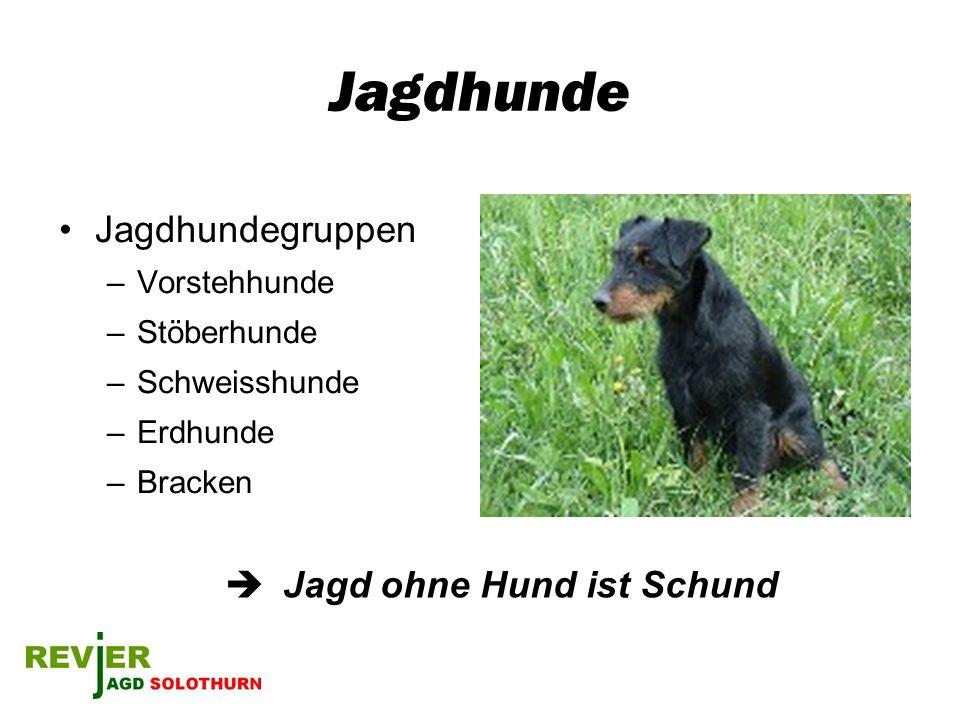 Jagdhunde Jagdhundegruppen  Jagd ohne Hund ist Schund Vorstehhunde