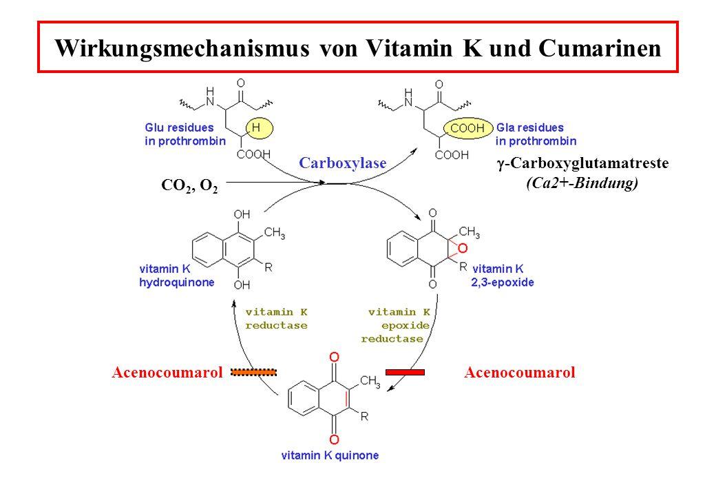 Wirkungsmechanismus von Vitamin K und Cumarinen