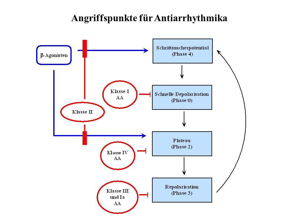 Angriffspunkte für Antiarrhythmika