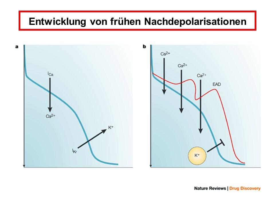 Entwicklung von frühen Nachdepolarisationen
