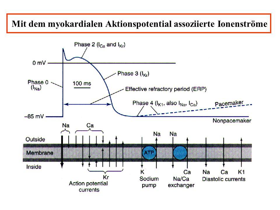Mit dem myokardialen Aktionspotential assoziierte Ionenströme