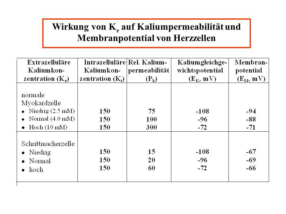 Wirkung von Ke auf Kaliumpermeabilität und Membranpotential von Herzzellen