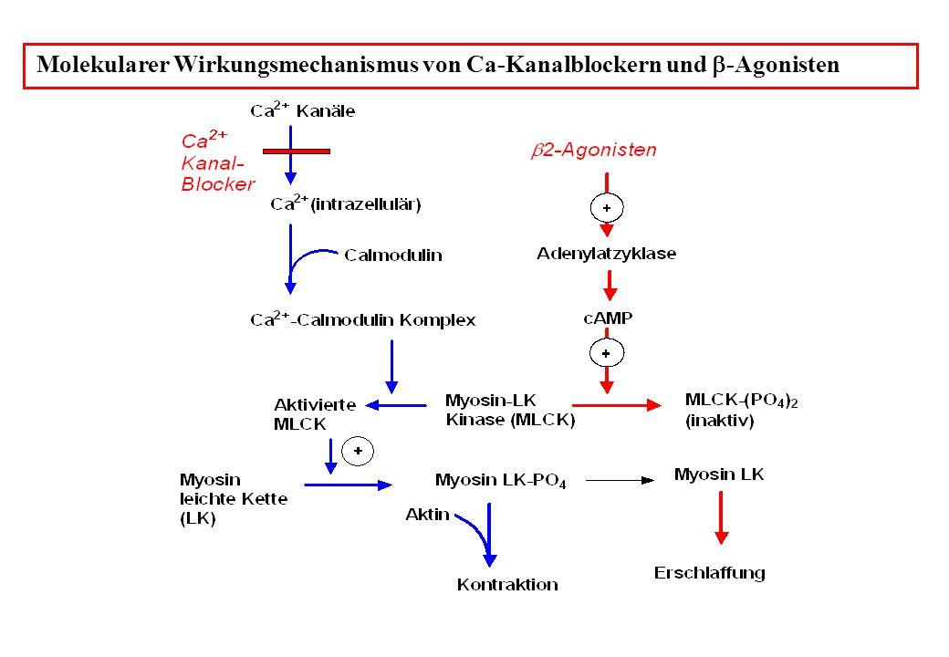Molekularer Wirkungsmechanismus von Ca-Kanalblockern und b-Agonisten