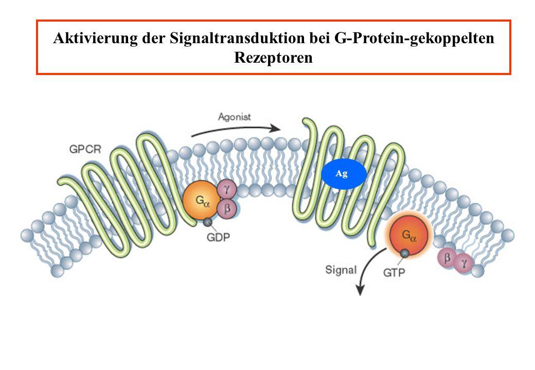 Aktivierung der Signaltransduktion bei G-Protein-gekoppelten Rezeptoren