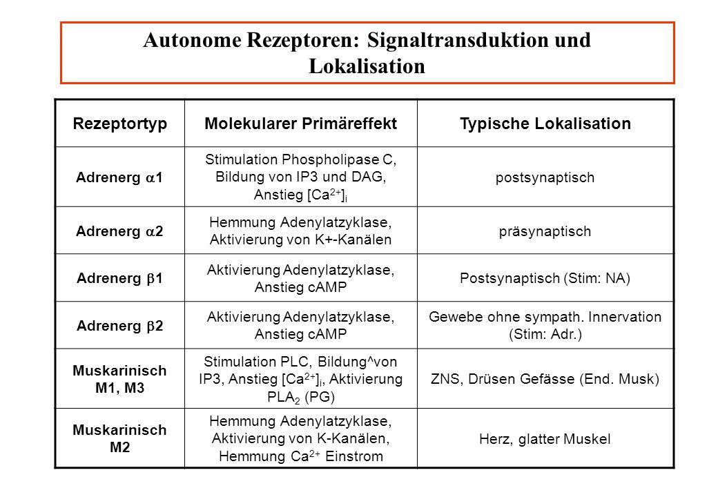 Autonome Rezeptoren: Signaltransduktion und Lokalisation