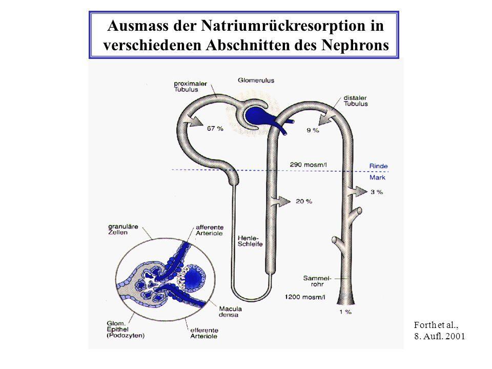 Ausmass der Natriumrückresorption in verschiedenen Abschnitten des Nephrons