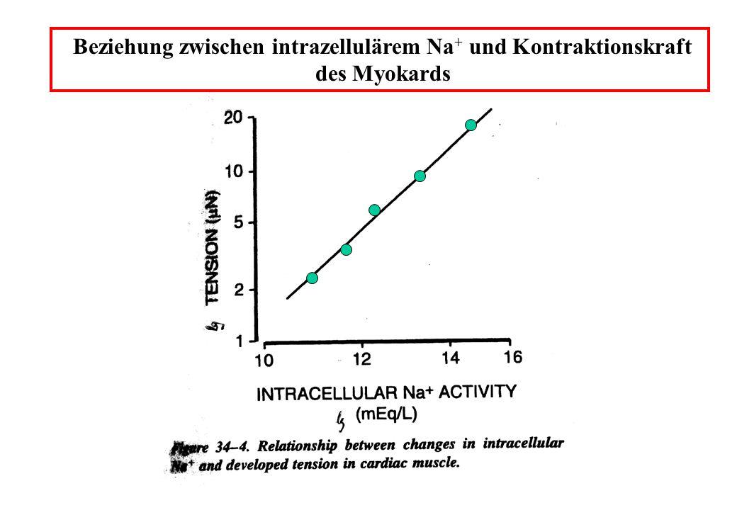 Beziehung zwischen intrazellulärem Na+ und Kontraktionskraft des Myokards