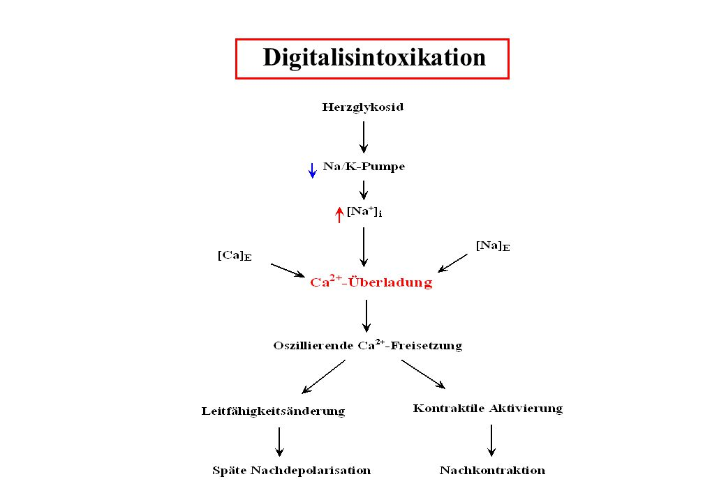 Digitalisintoxikation
