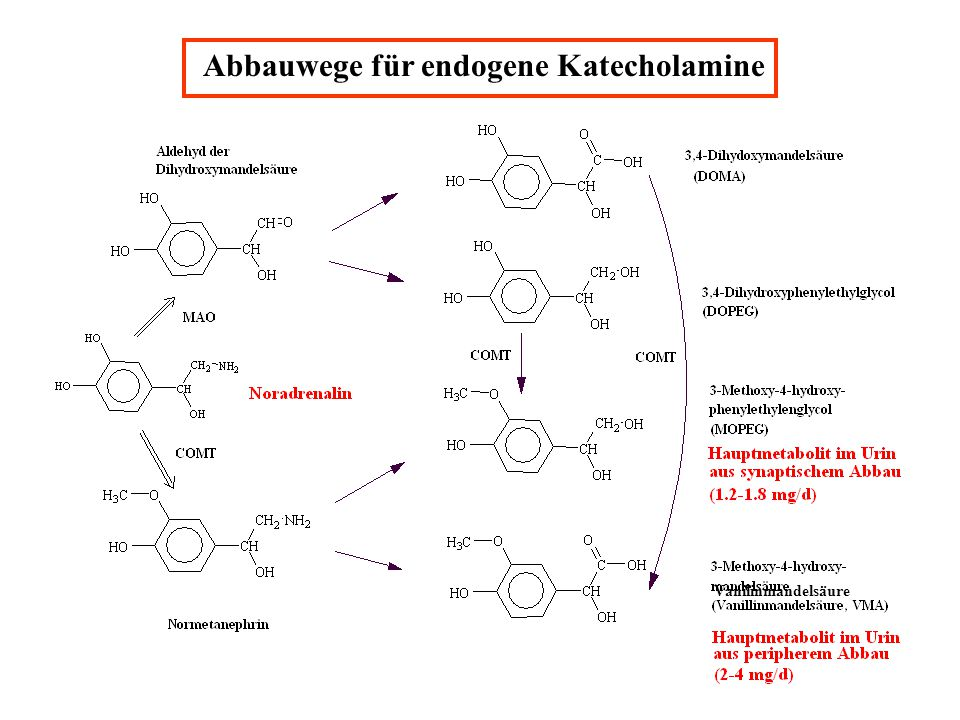 Abbauwege für endogene Katecholamine