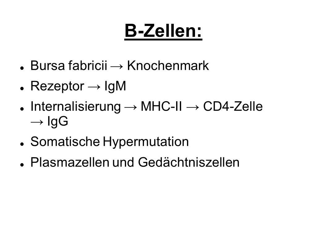 B-Zellen: Bursa fabricii → Knochenmark Rezeptor → IgM