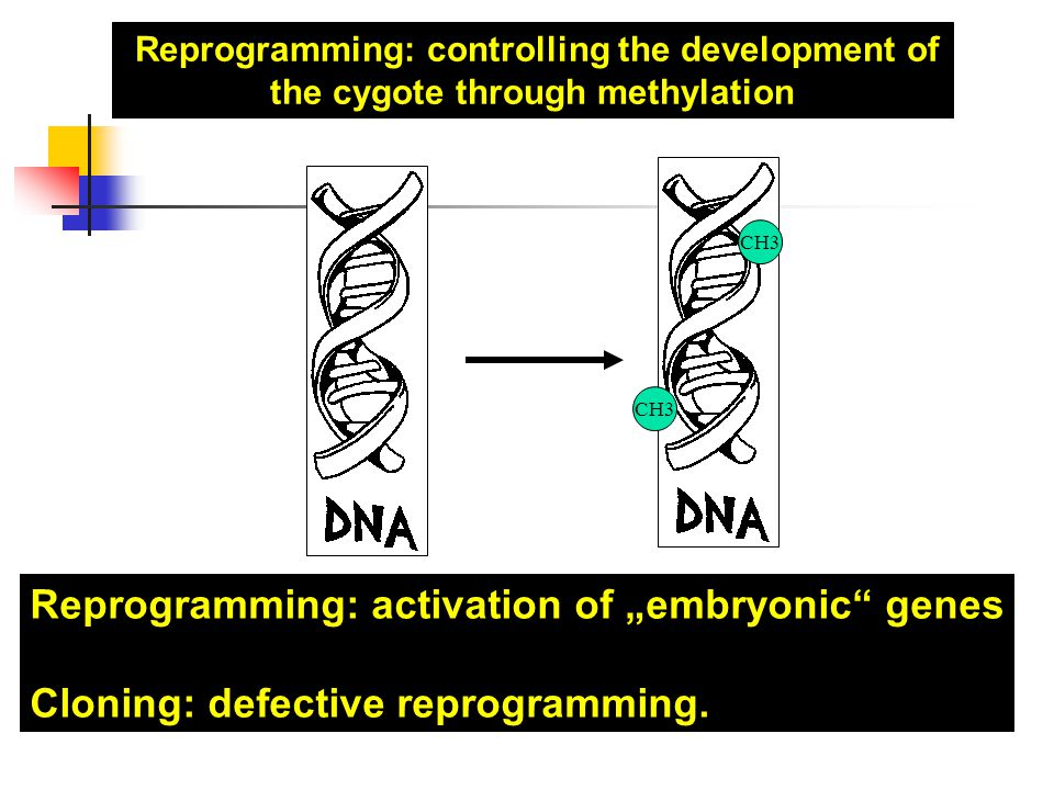 "Reprogramming: activation of ""embryonic genes"
