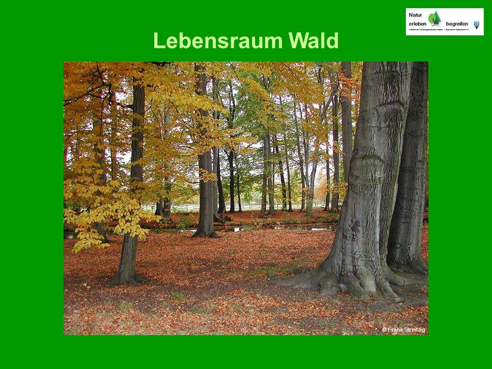 Lebensraum Wald © Frank Streitzig