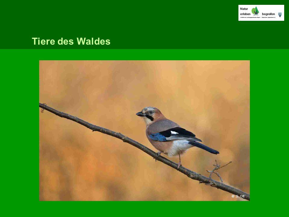 Tiere des Waldes © S. Ott