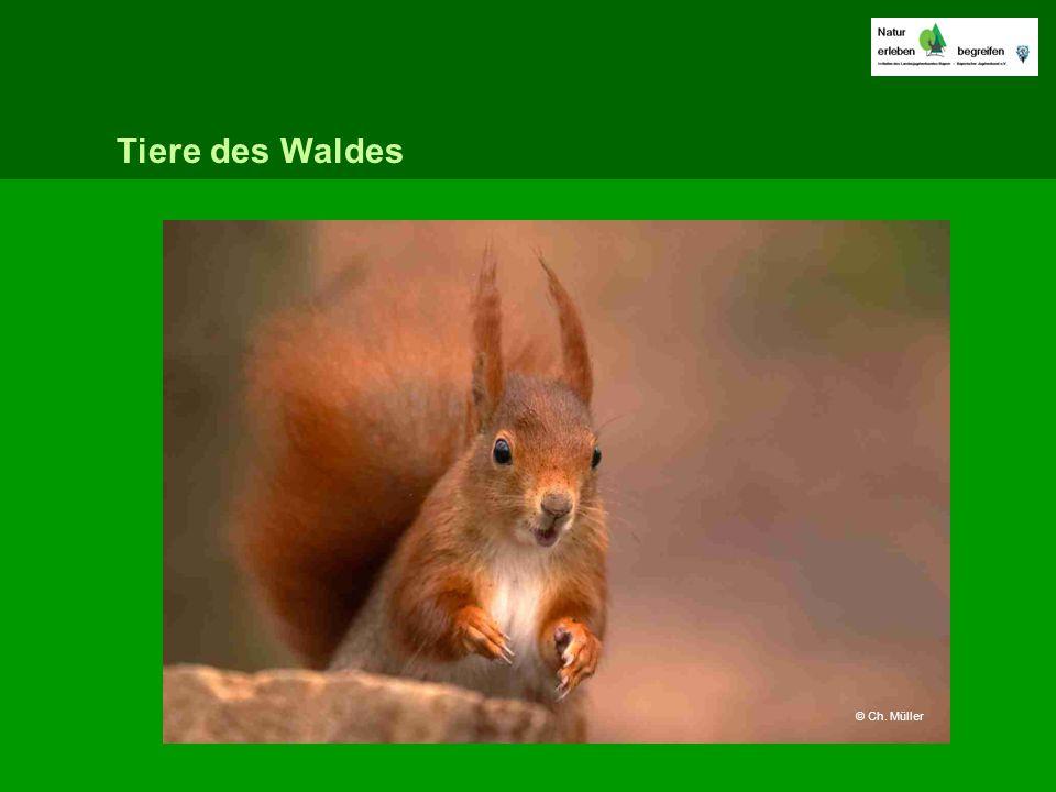 Tiere des Waldes © Ch. Müller