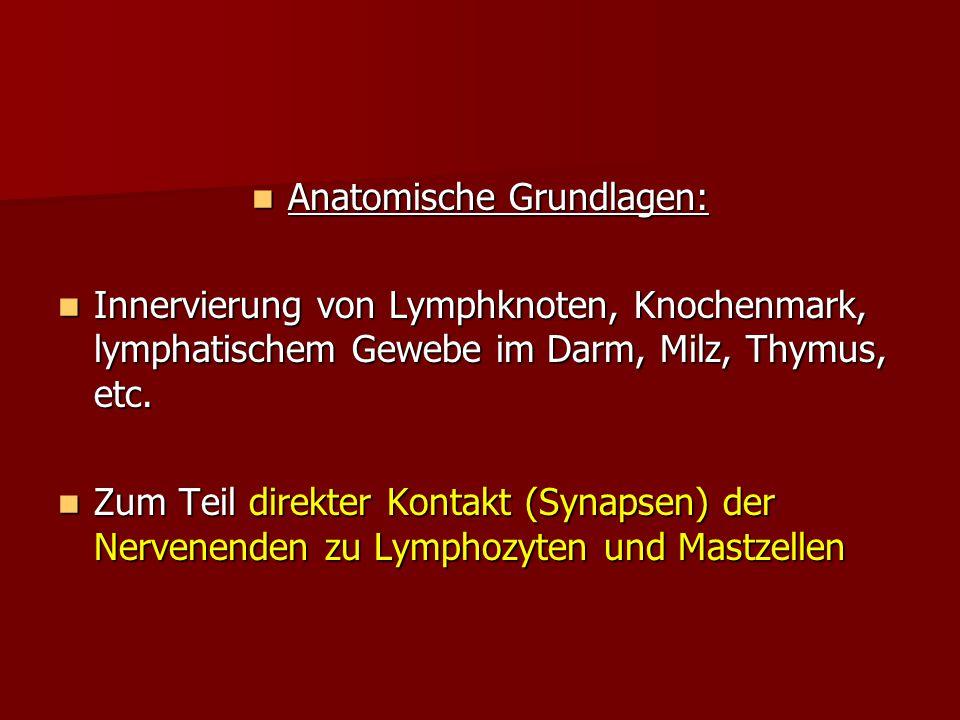 Anatomische Grundlagen: