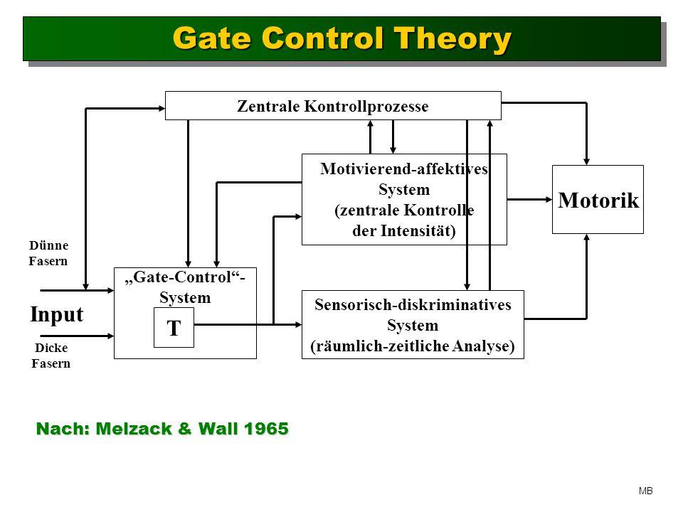 Gate Control Theory Motorik Input T Zentrale Kontrollprozesse