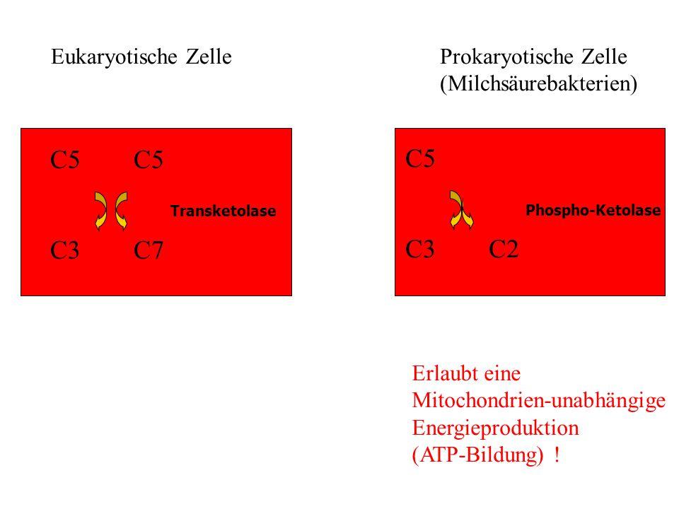 C5 C5 C5 C3 C7 C3 C2 Eukaryotische Zelle Prokaryotische Zelle