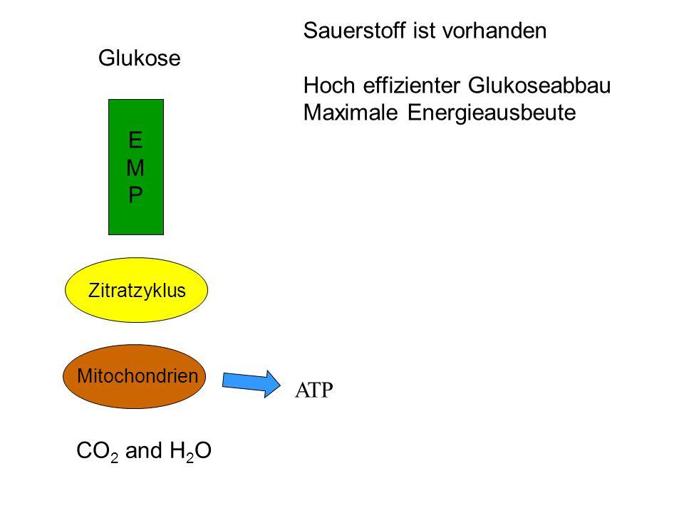 Sauerstoff ist vorhanden Hoch effizienter Glukoseabbau