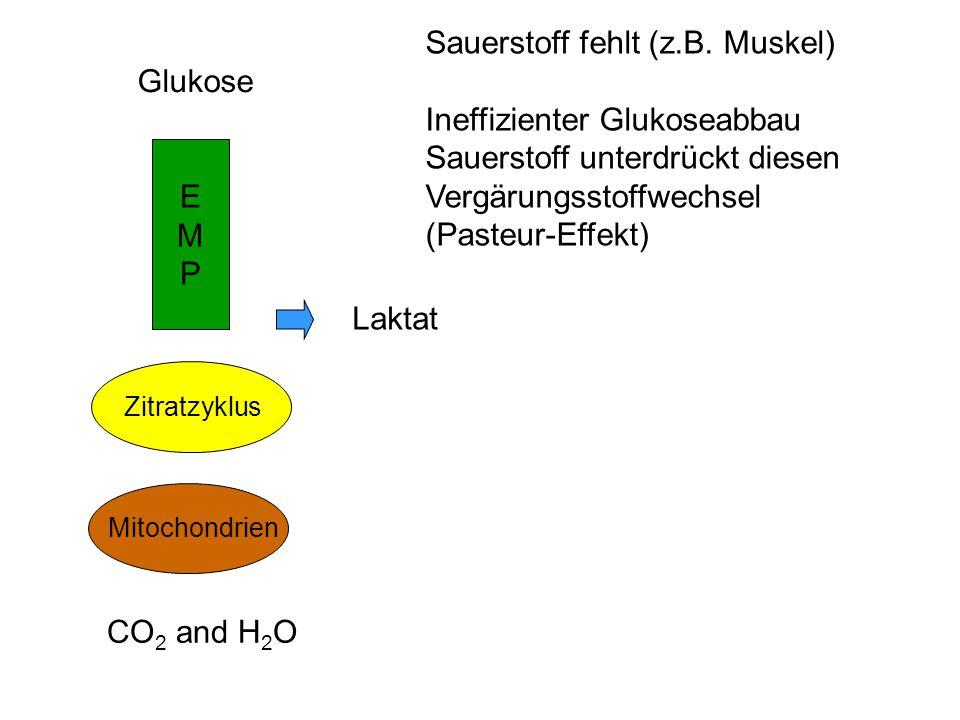 Sauerstoff fehlt (z.B. Muskel) Ineffizienter Glukoseabbau