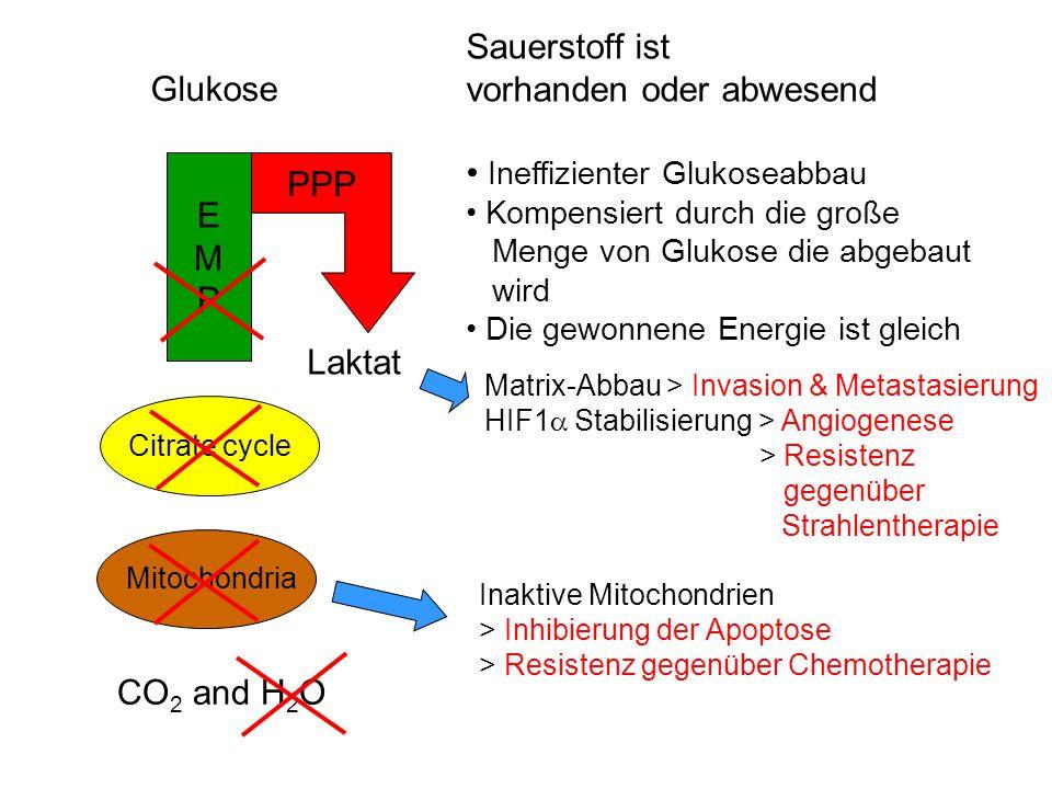 vorhanden oder abwesend Ineffizienter Glukoseabbau Glukose
