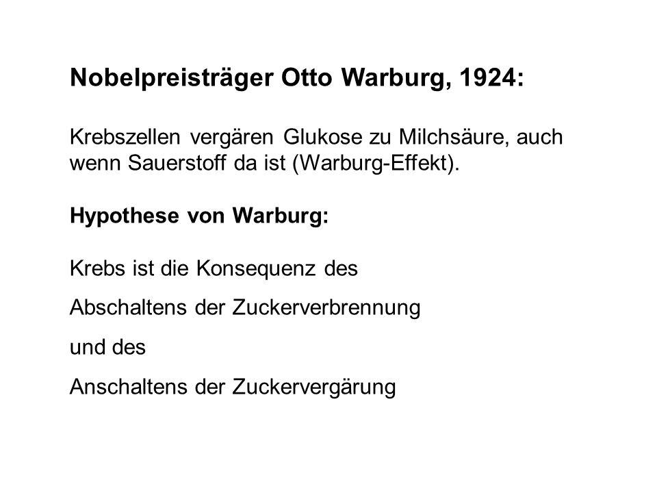 Nobelpreisträger Otto Warburg, 1924:
