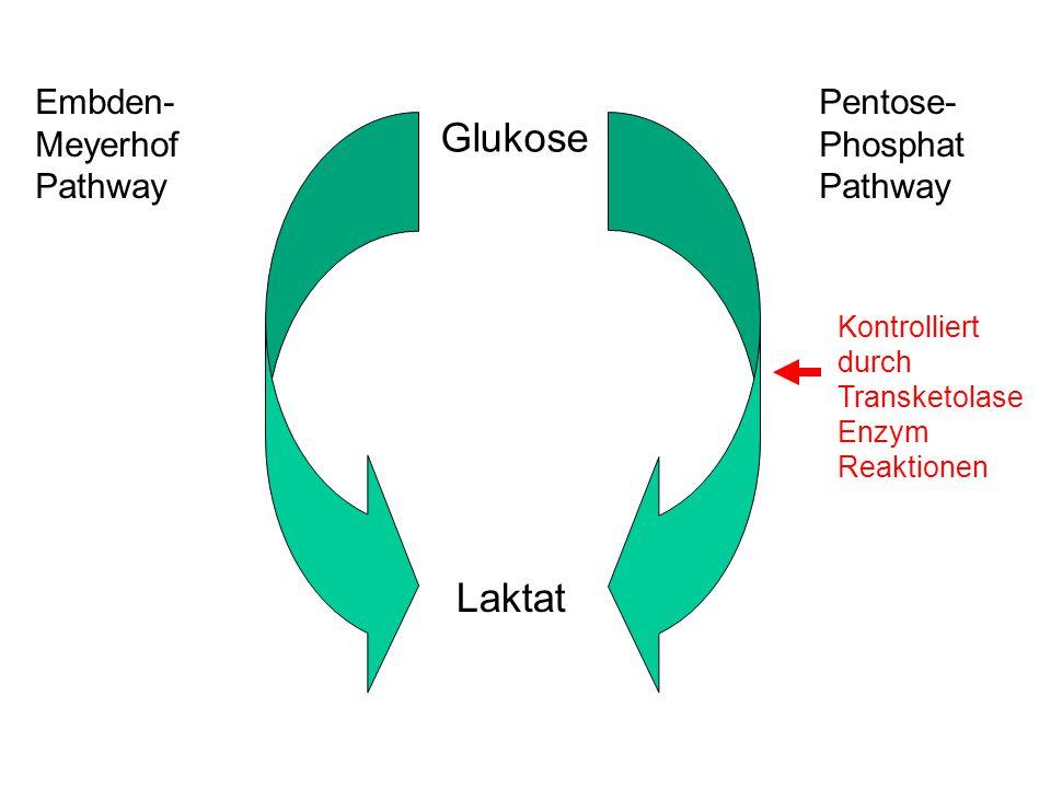 Glukose Laktat Embden-Meyerhof Pathway Pentose- Phosphat Pathway