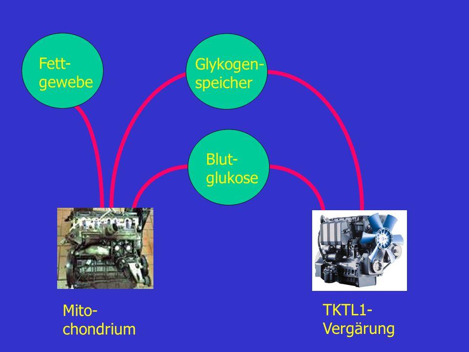 Fett- gewebe Glykogen- speicher Blut- glukose Mito- chondrium TKTL1- Vergärung