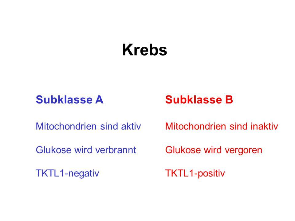 Krebs Subklasse A Subklasse B Mitochondrien sind aktiv