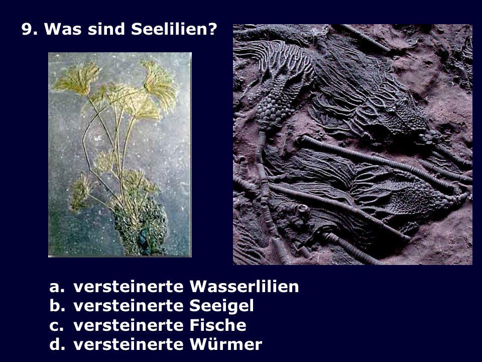 9. Was sind Seelilien. versteinerte Wasserlilien.