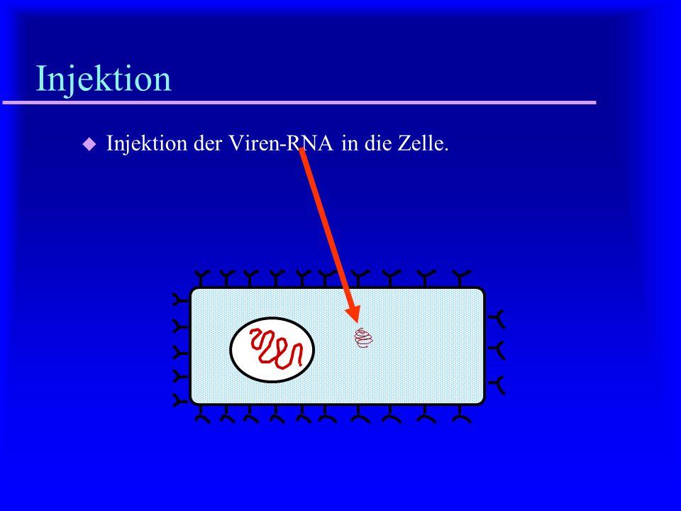 Injektion Injektion der Viren-RNA in die Zelle.