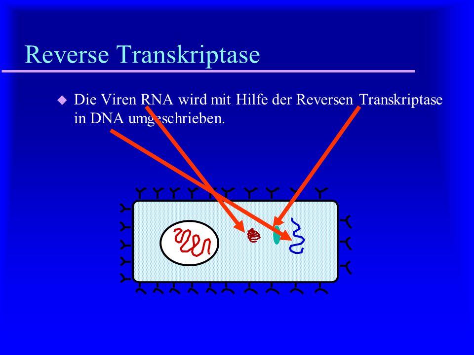 Reverse Transkriptase