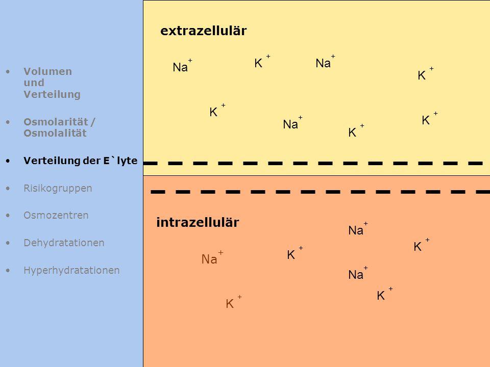 extrazellulär K + Na+ Na+ K + K + K + Na+ K + intrazellulär Na+ K +
