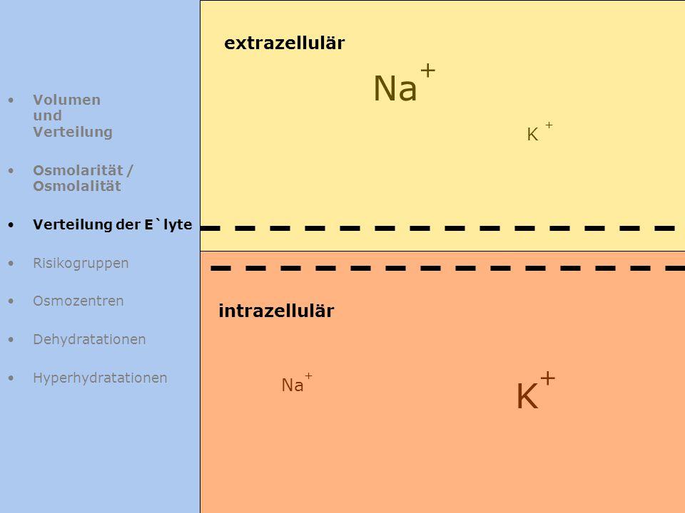 Na+ K+ extrazellulär K + intrazellulär Na+ Volumen und Verteilung